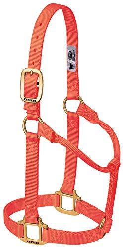 Weaver Leather Original Non-Adjustable Nylon Horse Halter, Large, Blaze Orange