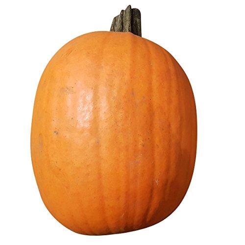 Halloweenkürbis - echter Schnitzkürbis - ca. 30 cm Durchmesser und mind. 6 kg schwer - Kürbis zum Schnitzen für Halloween. Ganzer Kürbis, frisch geerntet. Natürliche Herbstdekoration - Halloweenkürbis in mittlerer (Halloween Schnitzen)