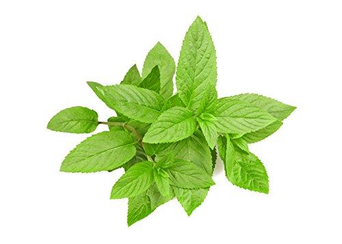 Aroma concentrato menta piperita 10ml - big flavor