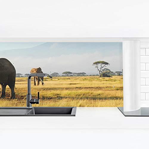 Bilderwelten Küchenrückwand - Elefanten vor dem Kilimanjaro in Kenya Smart 80 x 280 cm