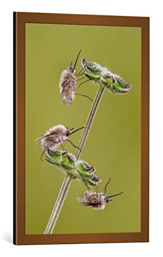 cuadro-con-marco-luigi-chiriaco-the-3-musketeers-impresion-artistica-decorativa-con-marco-de-alta-ca