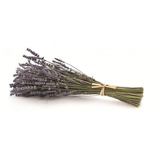 Frisch geernteter, getrockneter Lavendelstrauß aus der Provence (Strauß Natürliche)