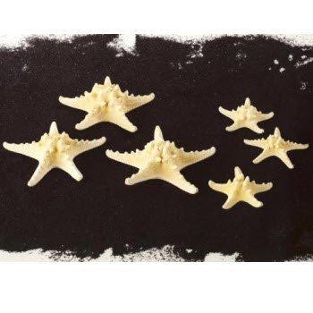 conf12-stelle-marine-cm8-12