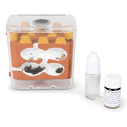 fourmiliere-biorama-avec-les-fourmis-gratuites