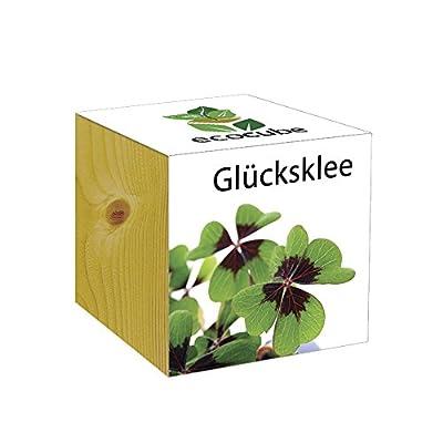 ecocube Holzwürfel - Glücksklee von Inventive Trading - Du und dein Garten