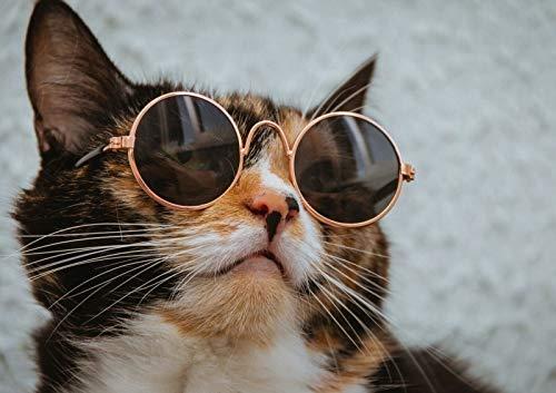 DV Posters A1 Katzen-tragende Sonnenbrillen Poster Kunstdruck 60 x 90 cm 180gsm lustiges Geschenk # 16931