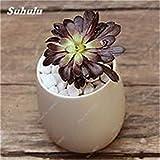 Gran venta ! 150 PC Mini suculentas de Semillas Semillas de cactus flor de piedra Lithops Pseudotruncatella de semillas para jardín contra la radiación 22