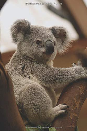 Koala Tagebuch: liniert, 120 Seiten A5+ Softcover | Mit Koala Bär als Motiv