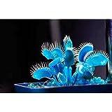 DERKOLY 100 Stücke Blau Dionaea Muscipula Riesen Venusfliegenfalle Samen Garten Decor Pflanzen
