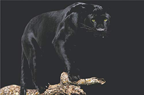 Yutirerly Black Panther Poster