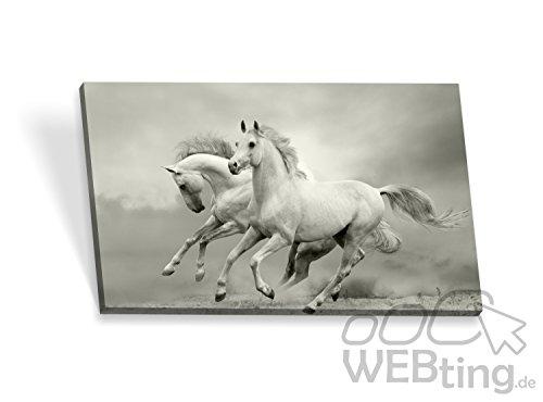 Telaio immagine Poster cavallo tela immagini tela