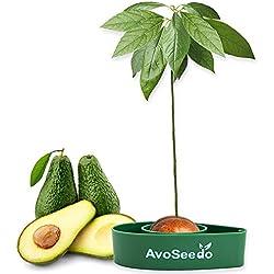 AvoSeedo das Besondere Garten Geschenk - Pflanzen Sie Ihren Eigenen Avocadobaum. Kleine Geschenke für Frauen, Mutter & Freundin/Oder als Geburtstagsgeschenk für Männer Klein Dekoration