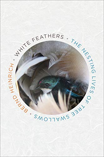 White Feathers: The Nesting Lives of Tree Swallows (Swallow Tree)