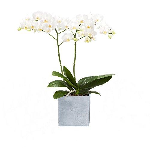 Dominik Blumen und Pflanzen 890202