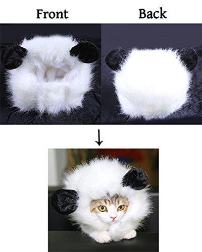 Xiaoyu Crin León Peluca Perro Gato, Actividad Fiesta