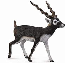 Collecta - Antilope De Cuello Negro (Sasin) -L- 88638 (90188638)