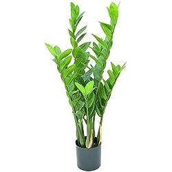 Euro Palms 82600153 Zamiifolia Kaktus, höhe 70 cm