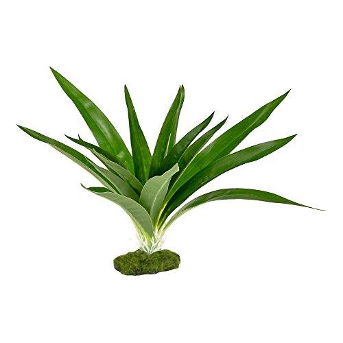 Blue Ribbon Pet Products 030157017712Colorburst Florals Dracaena deremensis breiten Blatt, grün (Pflanzen Blue Ribbon)