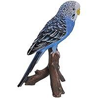Azul Budgerigar