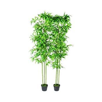 Piante Da Appartamento Bambu.Festnight Piante Ornamentali Da Interno Set Di 2 Bambu 190 Cm