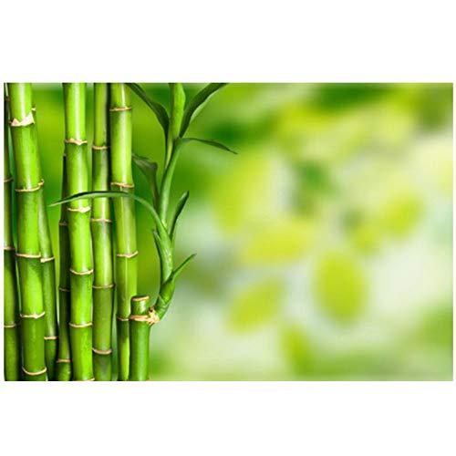 DUANWANBINGFBH Leinwand Malerei Frische Einfache Stil Grünen Wald Bambus Bild Malerei auf Wand Wohnkultur Für Wohnzimmer-50x70 cm Kein Rahmen