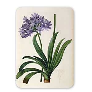 Agapanthus Umbrellatus, from 'Les Liliacees'..-Tappetino per il mouse in gomma naturale di alta qualità il mouse-Tappetino per il mouse