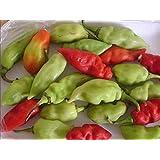 CUSHY Sugar Rush melocotón pimienta Semillas, (Capsicum baccatum) los frutos son maravillosamente dulces (10 semillas)