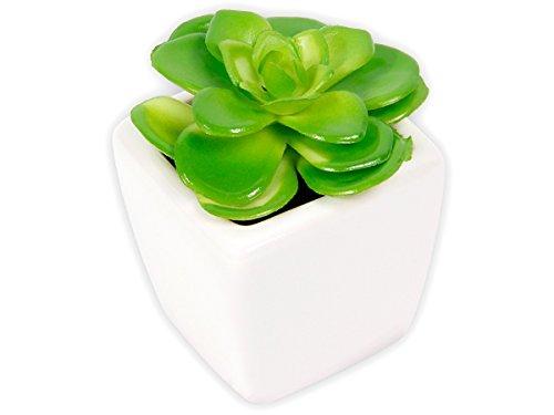 Plante grasse artificielle succulente cactée en mini pot céramique 101342 décoration de couleur naturelle très bien imitée pour décorer un rebord de fenêtre, une table basse, un buffet, un bureau, choisir:Suk-12