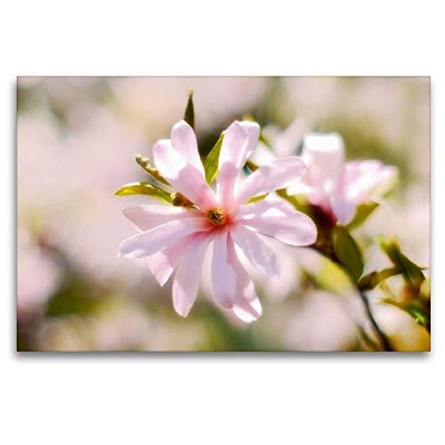 Tela di Alta qualità in Tessuto, 45 x 30 cm, Trasversale, la lucentezza Brillante della Magnolia Stellata, 120 x 80 cm