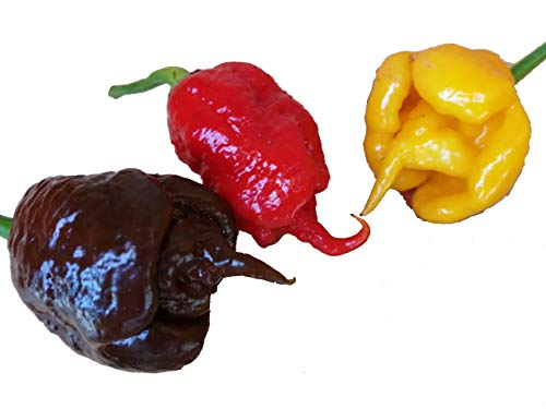 30 SEMI DI PEPERONCINO CAROLINA REAPER RED CHOCOLATE E YELLOW GUINNESS WORLD RECORD COME PIU' PICCANTE AL MONDO
