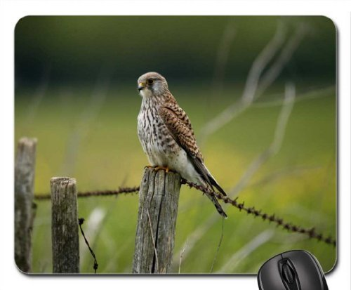 falcon-on-the-fence-mouse-pad-mousepad-birds-mouse-pad