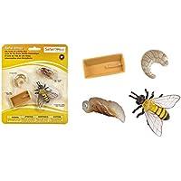 Juguete educativo del ciclo de vida de una abeja