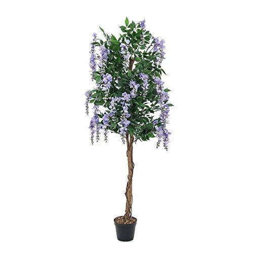 EUROPALMS Goldregenbaum, violett, 150cm