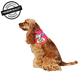 DogSpot Cookie Chor Bandana - Medium