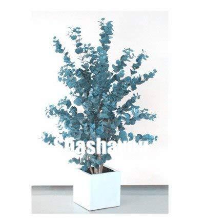 Bloom Green Co. Heißer Verkaufs-Bule Eukalyptusbaum Bonsai Pflanzen, 50 PC 100% echtes Zier-Baum Exotische Natur Wachstum Hausgarten Ornament: Violet