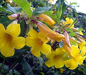 VISTARIC 2: pots de fleurs Big jardinières, 20 types, 50 PCS/Lot, Rainbow Rose graines belle rose graines bonsaïs graines, 2 B4LT8H