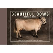 Beautiful Cows Postcard Book: 30 Postcards of Champion Breeds to Keep or Send