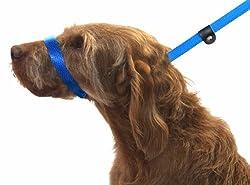 Hundeleine. Abbildung Von 8 Hundeleine. 3 Arten Von Hundeleine In 1 Produkt. Stoppt Hund Ziehen. Blau