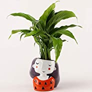 Ferns N Petals Peace Lily in Shy Girl Red Color Resin Pot