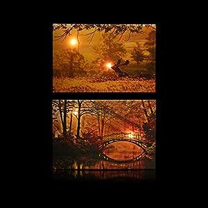 Online-Fuchs 2 LED Bilder mit Beleuchtung, Timer und Fernbedienung! - Leinwandbild 60 x 40 cm - Wandbild mit Sonnenuntergang im Wald