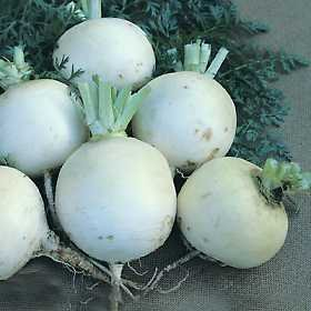premier-seeds-direct-tur04-turnip-snowball-seeds-pack-of-3500
