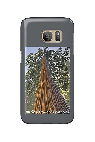 Big Basin Redwoods State Park, California - Looking up Tree (Galaxy S7 Cell Phone Case, Slim Barely There) -