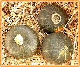 Bobby-Seeds Kürbissamen Buttercup Portion