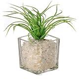 Artif-deco - Herbe artificielle succulente cactee en pot verre et cailloux blanc - choisissez votre modle: cactée 5