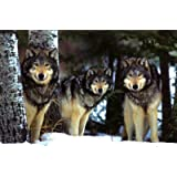 Poster Winter View Wolves 91 x 61 cm Ohne Rahmen