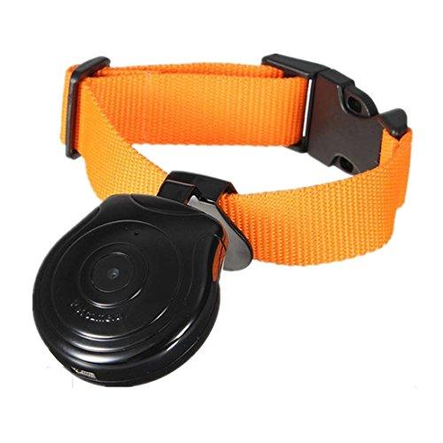 Hundehalsband Kamera - TOOGOO(R) Mini Digital Kamera Videorekorder Kamera DVR Video Recorder Hundehalsband fuer Hund Katze