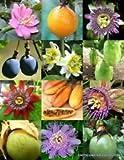 Passionsfrucht-Mix, Rare Passionsblume Essbare tropische Kletterpflanze Misch Seed -15 Samen