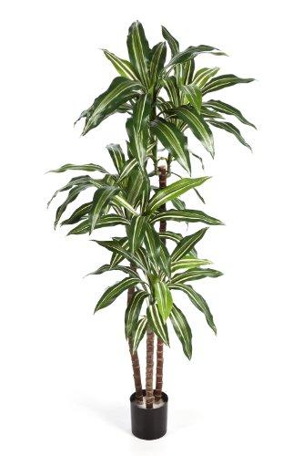 artplants – Deko Dracaena Fragrans Staude Laura, weiß-grün, 120 cm – naturgetreuer Kunstbaum/Künstliche Dracena