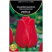 Bulbos - Tulipán Darwin rojo - Batlle