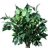 Decoflorales - Echter, auf Glycerinbasis konservierter Efeu; Farbe grün; Bund; ca. 5-6 Zweige; Länge ca. 50 cm